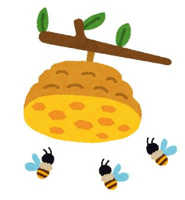 プロポリスを作るミツバチ作らないミツバチ